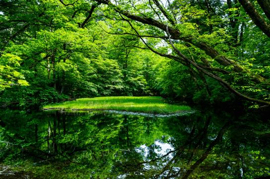 image of 자연